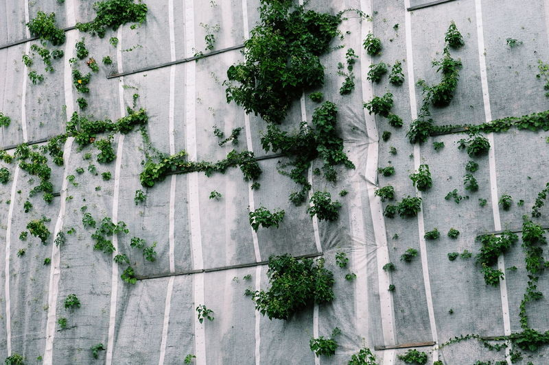 Architecture Plant Built Structure Ivy Green Color Tree Building Exterior Growth No People Day Outdoors Nature Close-up FUJIFILM X-T10 XF18-55mmF2.8-4 R LM OIS F/4.0 Iso 200 via Fotofall