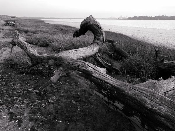 River View Deben River, Suffolk Landscape Photography Blackandwhite Photography No People Textures And Surfaces