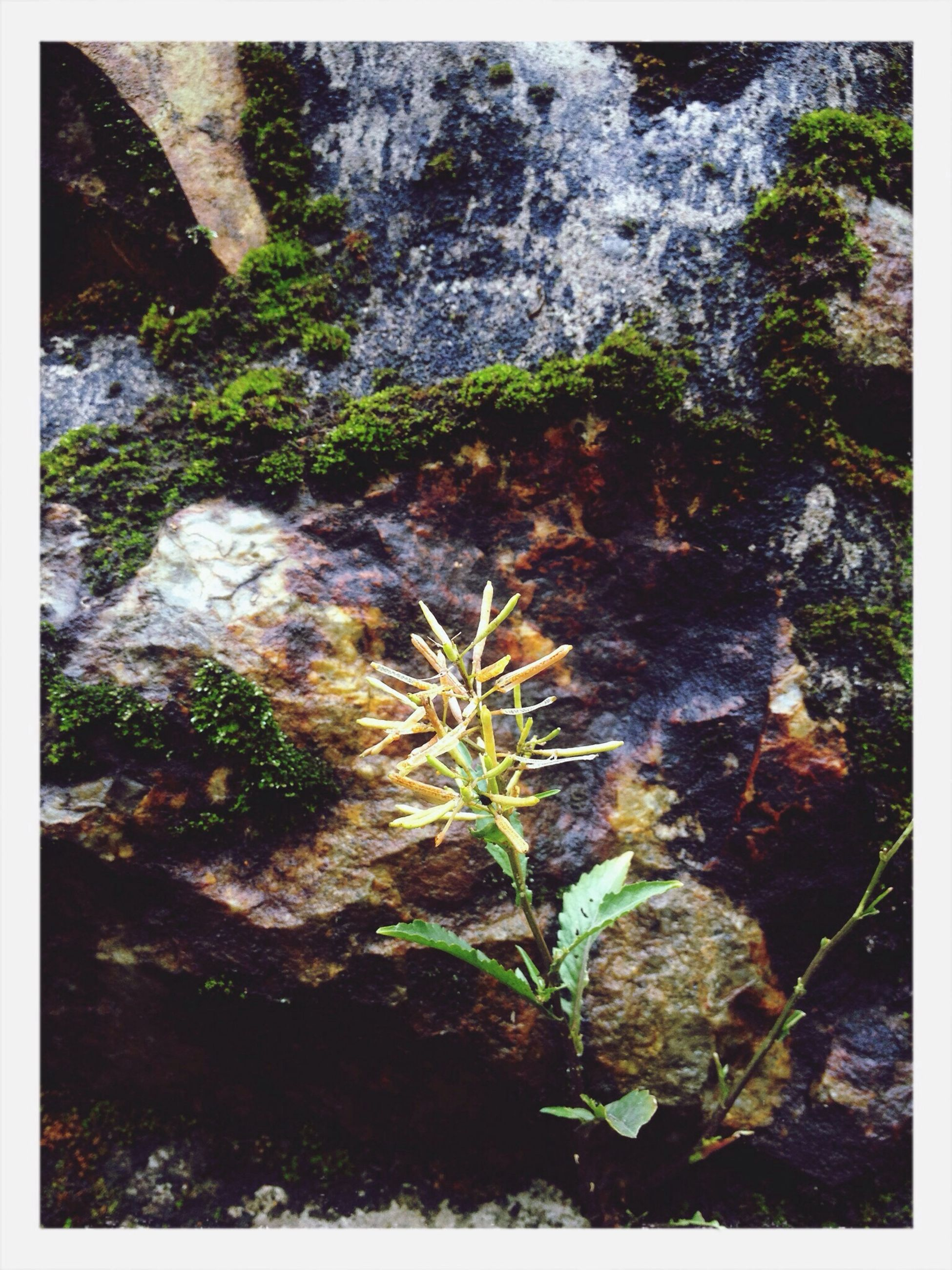 transfer print, rock - object, auto post production filter, nature, rock formation, rock, beauty in nature, plant, growth, tranquility, moss, high angle view, stream, outdoors, day, forest, textured, no people, close-up, rough