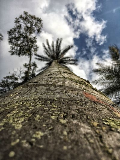 Close-up Scenics Tree Growth Nature Tree Trunk Low Angle View Outdoors No People Day Sky Beauty In Nature