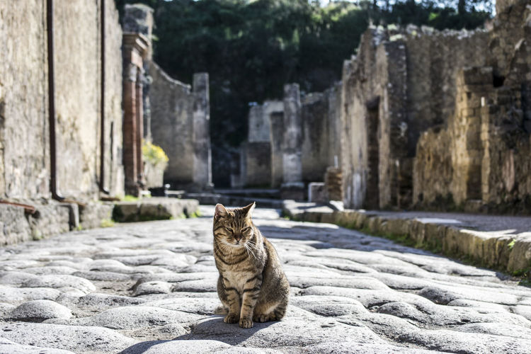 Animal Themes Architecture Built Structure Day Domestic Animals Domestic Cat Ercolano Feline Focus On Foreground Mammal Nature No People Old Ruin One Animal Outdoors Pets Retaining Wall Sitting