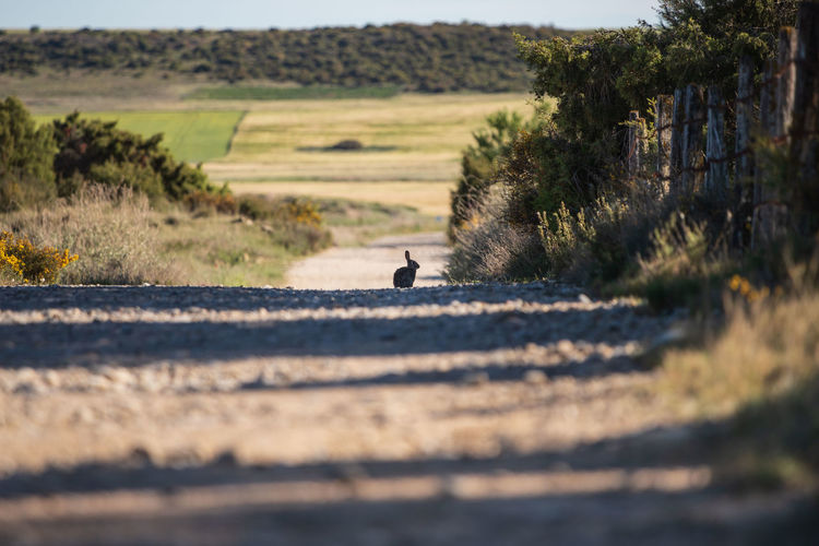View of rabbit on dirt road