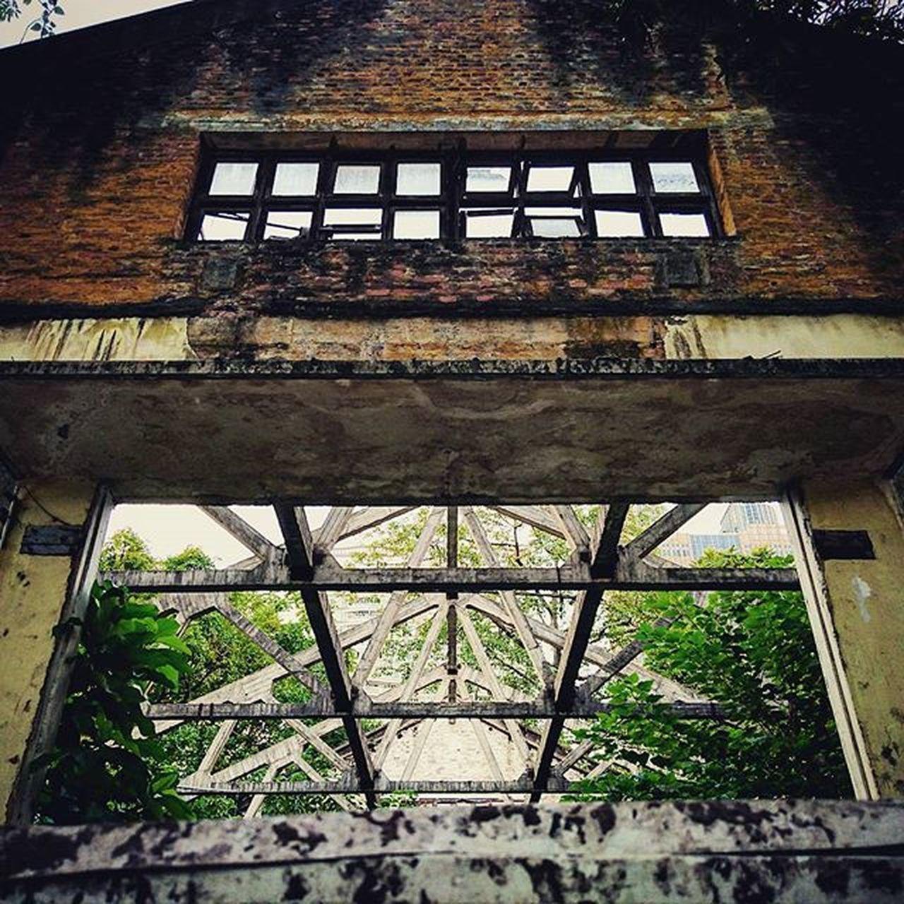 architecture, day, built structure, no people, low angle view, outdoors, growth