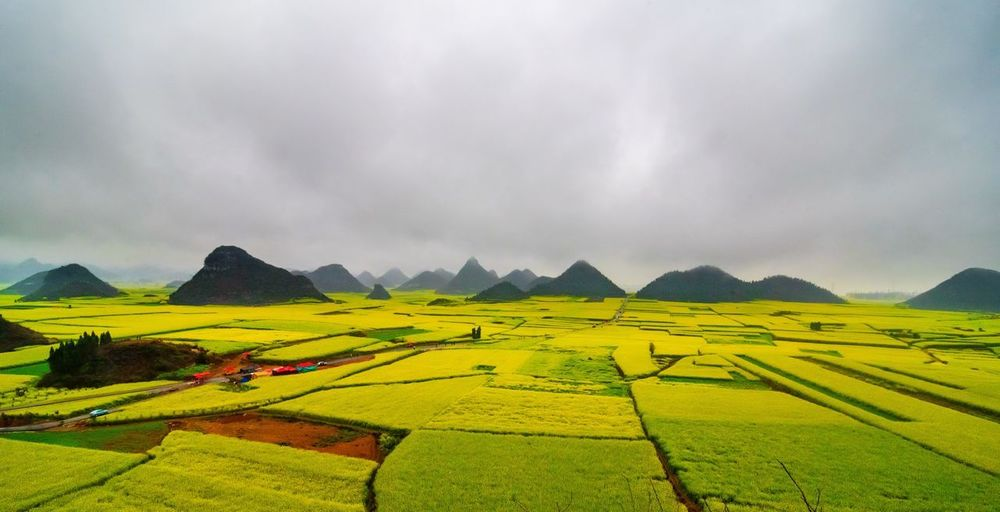 Canola field, rapeseed flower field with the mist in Luoping, China Luoping Rain Rapeseed Field Aerial View Agriculture Beauty In Nature Canola Canola Field Crop  Cultivated Land Day Farm Field Fog Hill Landscape Mist Mountain Mountain Range Nature No People Outdoors Patchwork Landscape Rapeseed Oil Rapeseed Yellow Tadaa Rural Scene Scenics Sky Tourism Tranquil Scene Tranquility Village