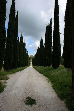 Amelia Cloud - Sky Cypress Trees  Day Diminishing Perspective Empty Road Italy Landscape Nature No People Outdoors The Way Forward Umbria Villa ın A Row