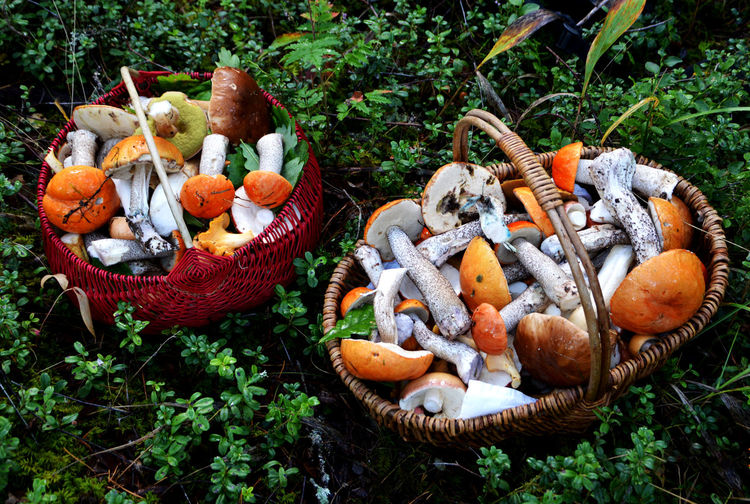 High angle view of edible mushrooms in baskets on field