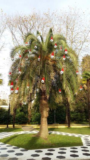 Новый год скоро! Сочи, парк Ревьера. футбол елочные игрушки Новый год Happy New Year Sochi Сочи Море пальма парк Ревьера Tree Outdoors Day No People Growth Nature Grass Sky