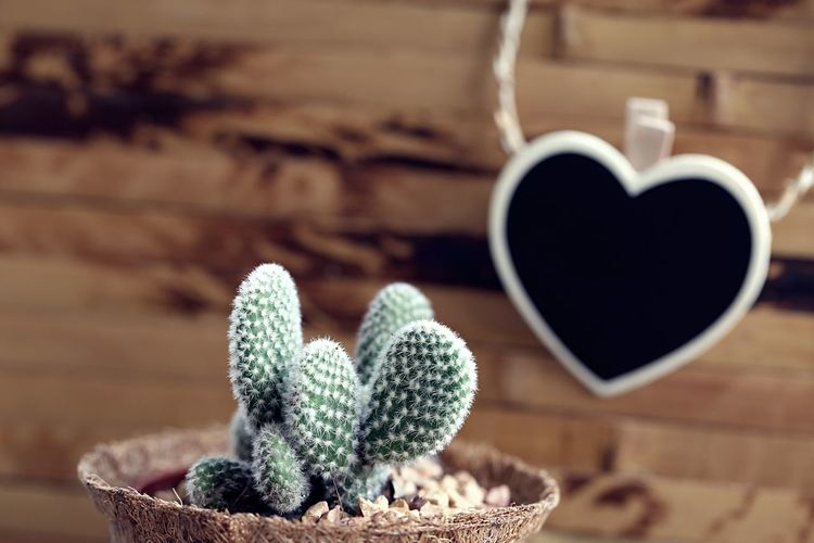 Close-up of succulent plant on table against wall