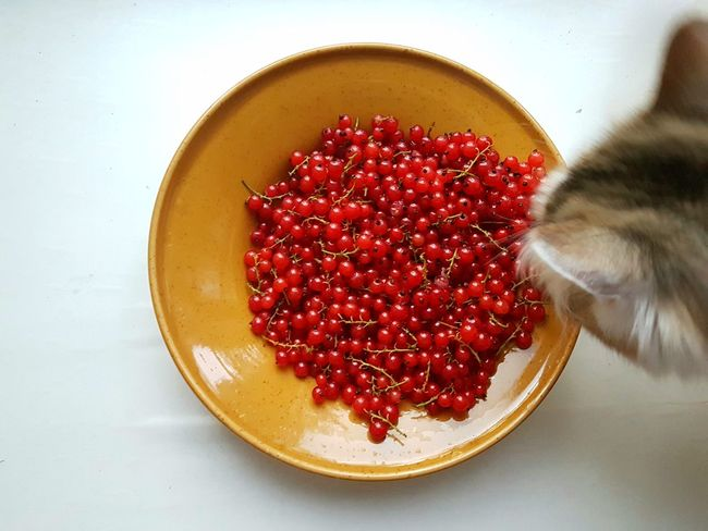 Pet Portraits Cats Of EyeEm Cat Lovers Domestic Cat Animal Themes Red Currant Plate Berries Cat♡ Naughty Cat Curiosity Freshness Healthy Eating Paint The Town Yellow
