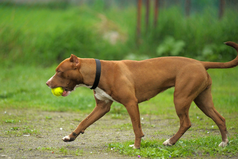Side view of a dog on field