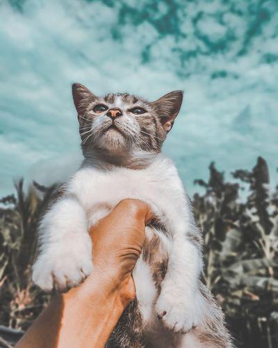 Close-up of cat looking at camera