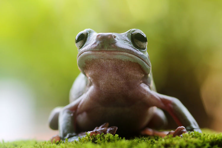 Close-up of frog