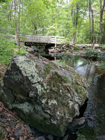 Heart of stone Day No People Outdoors Nature Growth Tree Close-up Bridge Over Water Heart ❤ Rock - Object Stone - Object Nature Photography Mossy Rock Breathing Space The Week On EyeEm Perspectives On Nature