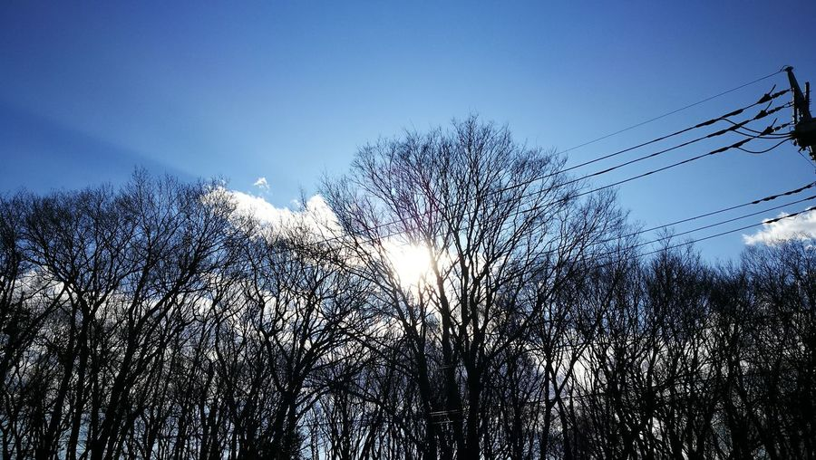 Sky Nature No People Cloud - Sky Sunset Close-up Beauty In Nature Tranquility Tree Fragility Outdoors Day
