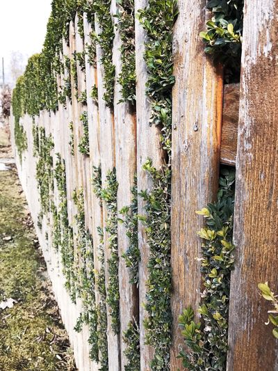 Fence Wood - Material Growth Tree Trunk Tree No People Green Color Outdoors Wooden Post Nature Day Picket Fence Plant Bamboo - Plant Grass Ivy Close-up Beauty In Nature Bamboo Grove