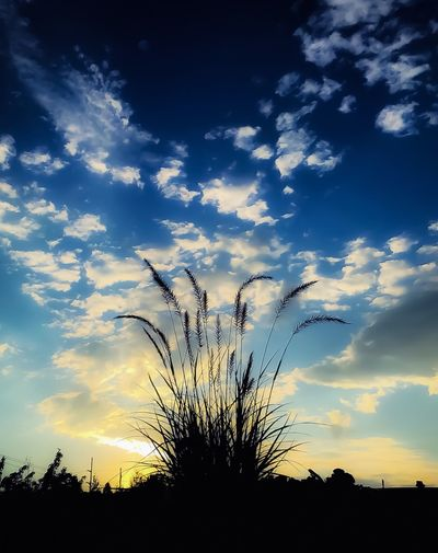 Sunset Silhouette Sky Low Angle View Beauty In Nature Nature Cloud - Sky Tranquil Scene Scenics No People Tranquility Plant Growth Outdoors Evening Textures And Surfaces Taking Photos Wandering Around Aimlessly Relaxing