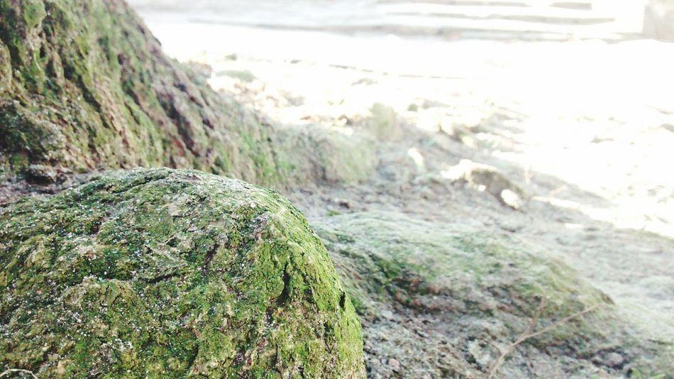 TREE Tree Galactus_god Biology Photography Trip Photo First First Eyeem Photo