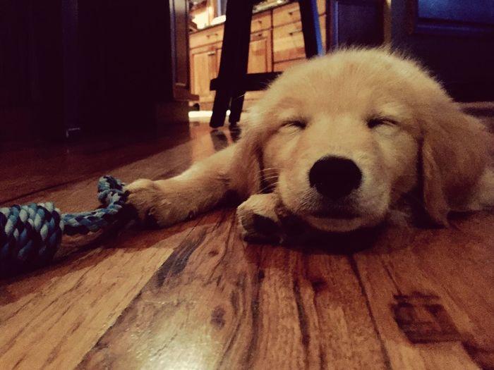 Sleepy puppy on Sunday Game day!! First Eyeem Photo
