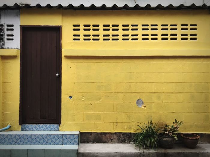 Yellow potted plant on wall of building