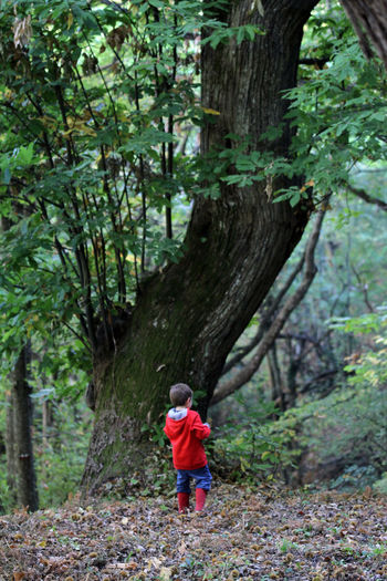 Rear view of boy standing in forest