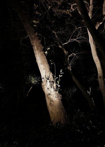 Bare tree on field at night