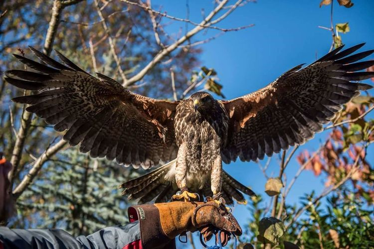 Low angle view of eagle perching on hand of man