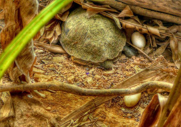 Turtle Turtle 🐢 Turtle Egg Zoo Zoophotography