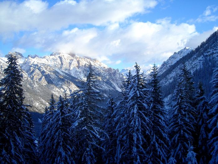 Winter is here! Winter Winter Wonderland Winter Trees Winter Wildlife Snow Snow ❄ Snow Covered Snow Mountain Winter Morning Winter Nature Outside Sky Blue Sky And Clouds Tree Snow Mountain Winter Cold Temperature Forest Pine Tree Pinaceae Sky Cloud - Sky Snowcapped Mountain Pine Woodland Coniferous Tree Mountain Range Evergreen Tree Snowcapped Deep Snow Rocky Mountains
