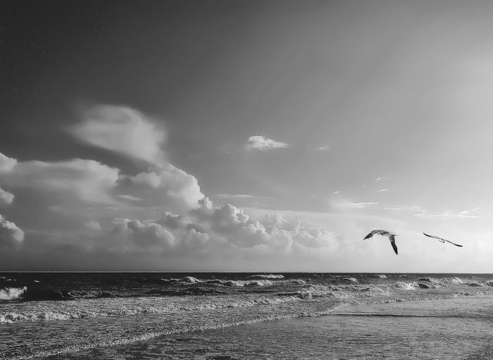 Sea Horizon Over Water Blackandwhite Sky Water Nature Beauty In Nature Cloud - Sky Scenics Tranquil Scene Outdoors Silhouette Birds Flying Tranquility Spread Wings The Week On EyeEm Relaxing Taking Photos Serenity Textures And Surfaces Morning Beach