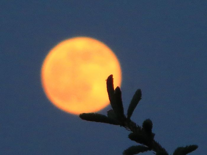 The Touch Reaching For The Moon Touching The Moon Moon Moon Shots Moon_collection Orange Orange Moon