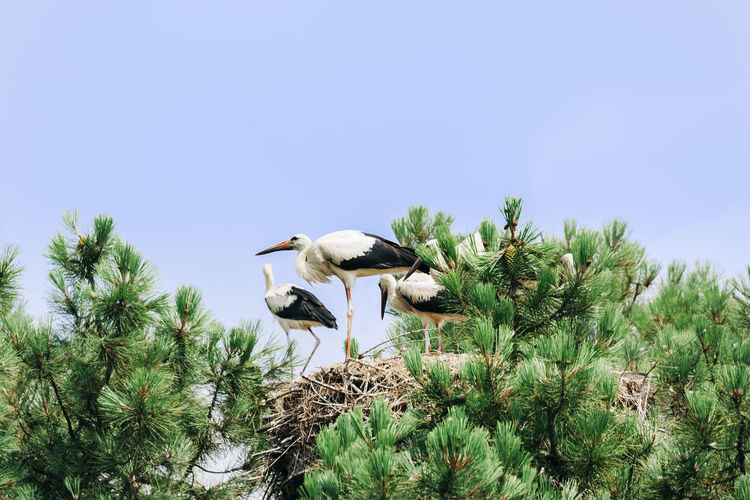 Low angle view of birds perching on plant against sky