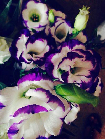 My Lovely Flowers Only китайская роза White And Purpule