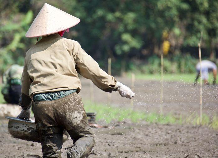 Rear view of farmer working on field