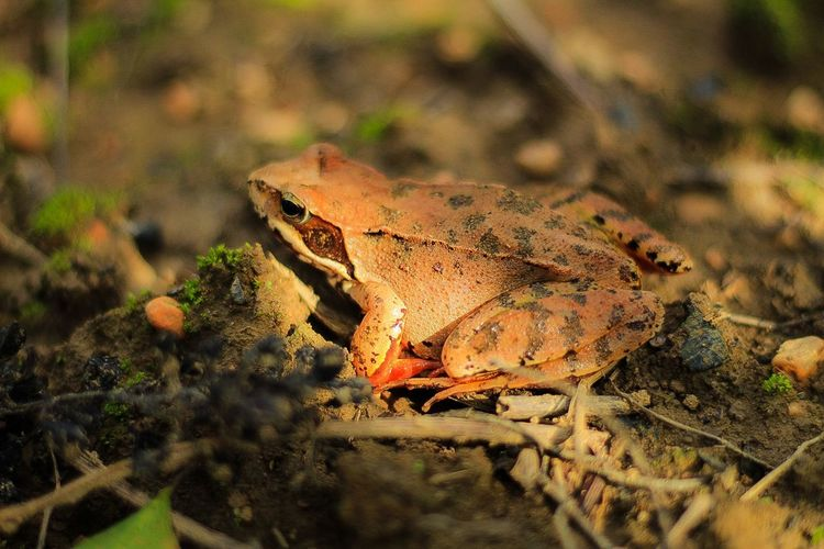 Froog Reptile