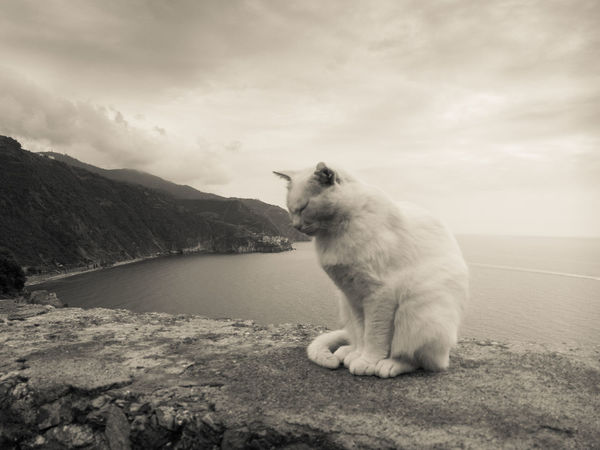 A cat watches the city. Animals Beauty In Nature Cat Catzilla  Cloud - Sky Coastline Day No People One Animal Scenics Sea And Sky