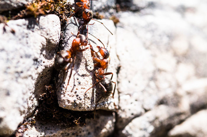 Smalltalk Ants Smalltalk Teamwork Animal Animal Wildlife Ant Close-up Insect Nature Outdoors Rock Selective Focus Trio