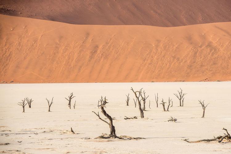 Scenic view of sand dune in desert