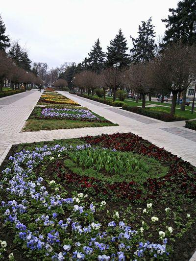 краснодар весна март цветы Krasnodar Spring March Flowers Printemps Mars Decorative Lawns Street City Russia