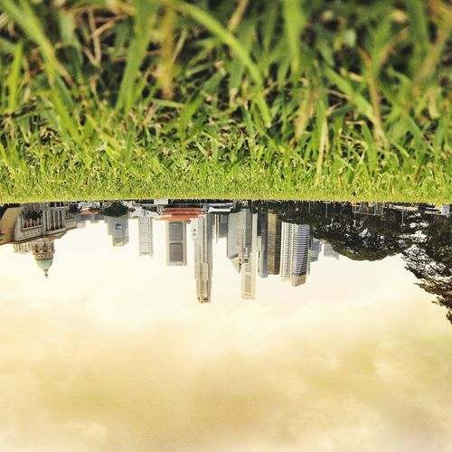 UpSideDown Singapore Nationalgallery Nationalgallerysingapore Landscape Grasss Towers Building Downtown Metrocity Field Cricket! Cricket Field Sky Cloudy Cloudy Day Cloudy Sky Green Nature