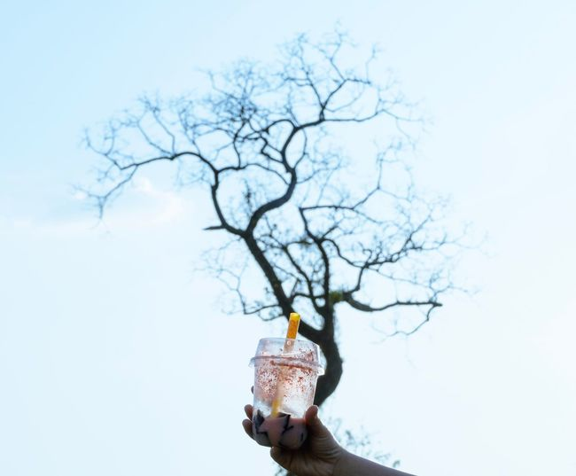 Juice Blue Dry Juice Tree One Person Sky Plant Branch Nature Women Outdoors Copy Space Holding