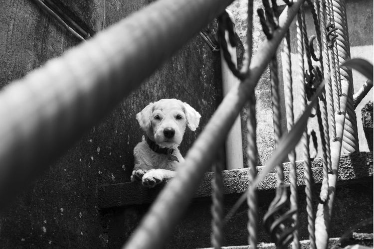 our latest rescue - michi Bali Looking At Camera Pet Portraits Black And White Bokeh Canine Dog Makeportraits Monochrome Nikonphotography Pooch Puppy Selective Focus Steps And Staircases