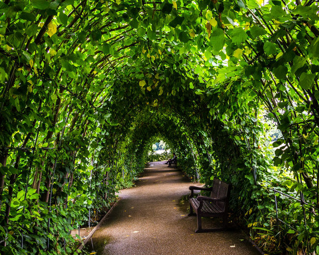Bench Break Diminishing Perspective Empty Footpath Green Green Color Growth Kensington Gardens Lush Foliage Middaybreak Nature Park - Man Made Space Park Bench Pathway Plant Solitude The Way Forward Tranquil Scene Tranquility Tree Treelined Walkway