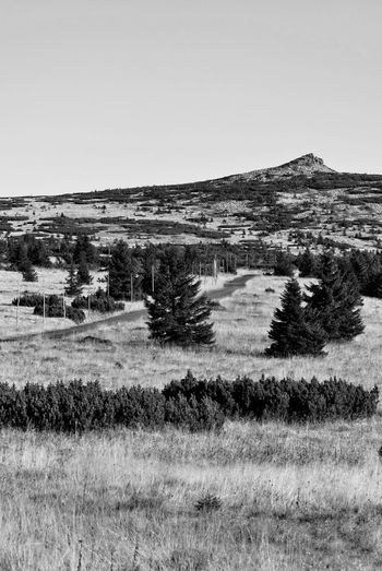 Labsky Peak Beauty In Nature Black And White Clear Sky Copy Space Day Field Freedom Grass Hiking Karkonosze Labsky Peak Landscape Mountain Peak Mountain View Nature No People Outdoors Road Scenics Sky Sudety Tranquil Scene Tree Trekking Violik