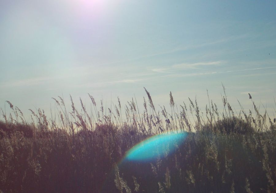 Landscape Open Edit Nature Soft Light Taking Photos Rays Of Sunshine Reflection Writing With Light