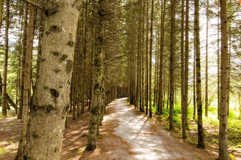 Tree Plant Forest The Way Forward Beauty In Nature Land Tranquility
