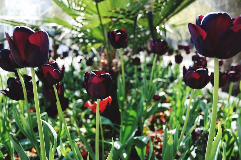 London Macro Photography spr Spring Flowers