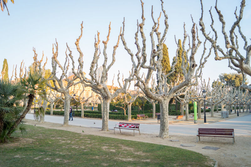 View of trees in park against sky