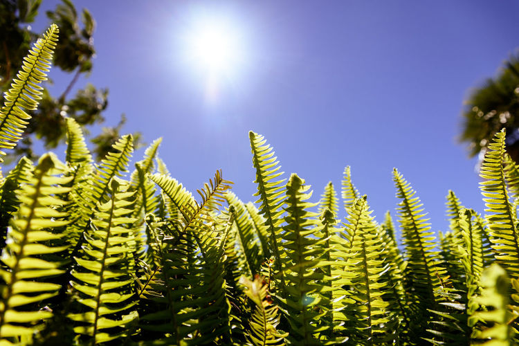 Close-up of fern against sky on sunny day