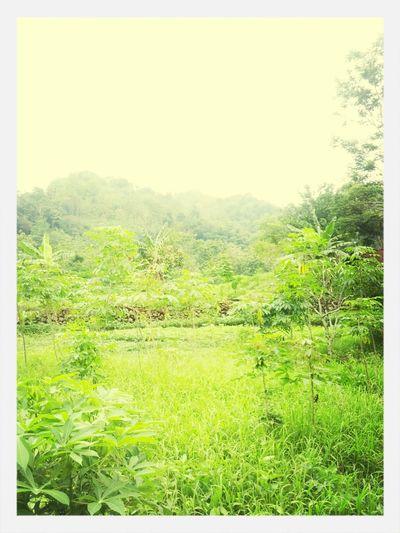Sawah, gunung, paturay tineung First Eyeem Photo