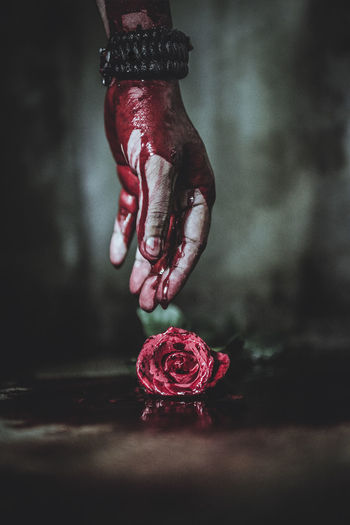 Cropped hand of person with blood reaching to rose on floor